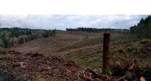 Clear Cut Logging, Hansville, WA