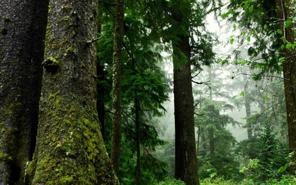 Typical whole and intact Pacific Northwest forest